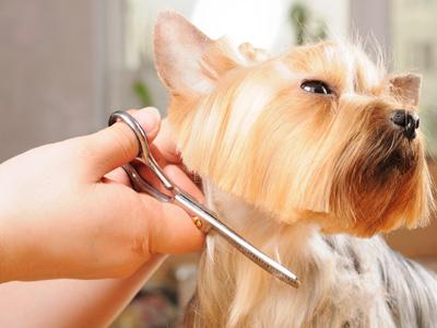 Curso peluqueria canina