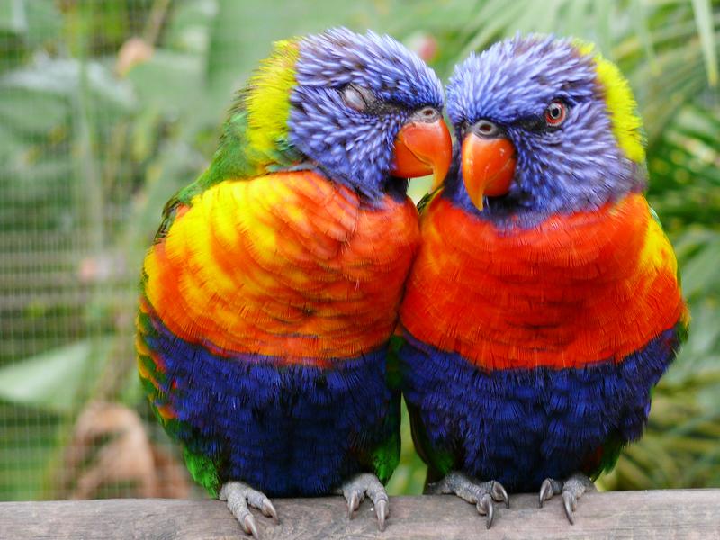 Intec especialista en aves exoticas for Imagenes de jardines exoticos