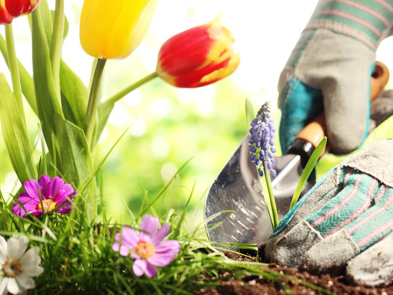 Intec el cuidado de las plantas plantas de jardin - Plantas de jardin fotos ...