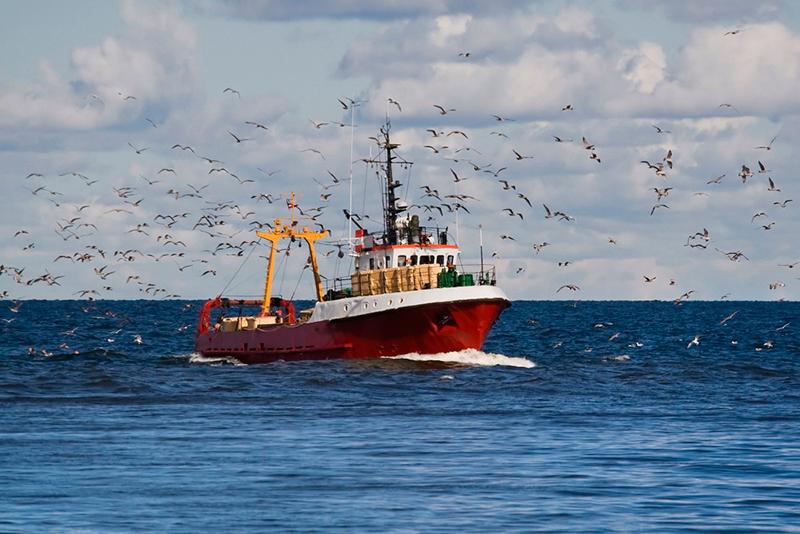 PREVENCIÓN DE RIESGOS LABORALES EN EL SECTOR DE PESCA BAJURA:Pesca y marisqueo